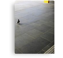 Trained Pigeon at Station  Canvas Print