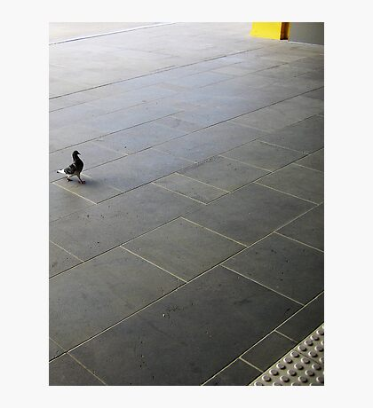 Trained Pigeon at Station  Photographic Print