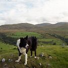 Indy on top of Dinas by Michael Haslam