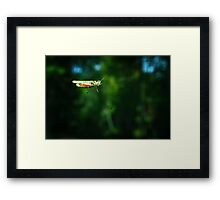 Hitchhiker on My Windshield Framed Print