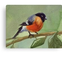 little birdie 2 Canvas Print