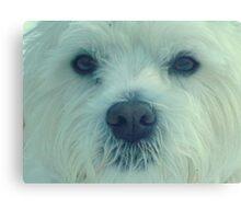 Buddie , my West Highland Terrier  Canvas Print