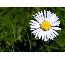 To-daises pic Photographic Print