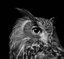 Eagle Owl by Lesley Scott