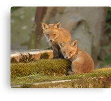 Fox cubs Canvas Print