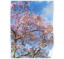 Magnolia Against the Sky Poster