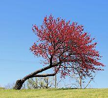 A Single Tree by aprilann
