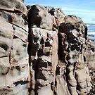 Beach Rock by Carol Field