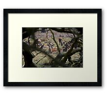 Through The Looking Log Framed Print