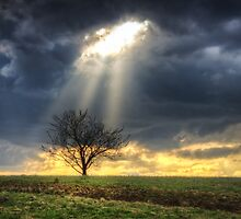 The rays of life by Mario Cehulic