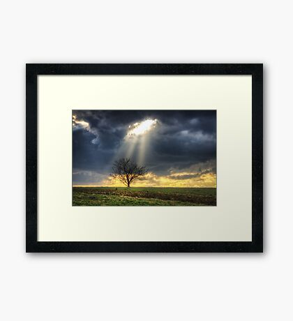 The rays of life Framed Print