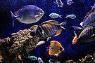 Aquarium  by Savannah Gibbs