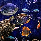 Aquarium  by venny