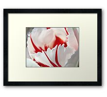 Tulip Flowers art prints Pink White Tulips Photography Framed Print