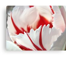 Tulip Flowers art prints Pink White Tulips Photography Canvas Print
