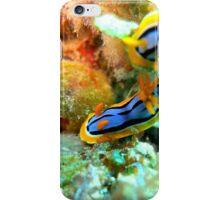 Nudibranchs iPhone Case/Skin