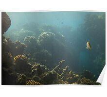 Underwater View Poster