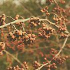Nature's beauties by ellenor