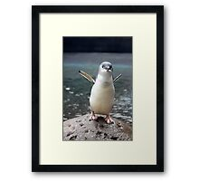 Little Blue Penguin Framed Print