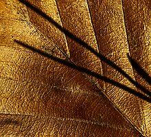Golden leaf by BeardyGit