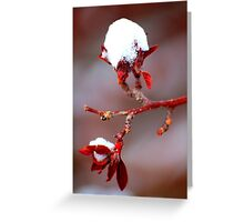 Tenacious Winter Greeting Card