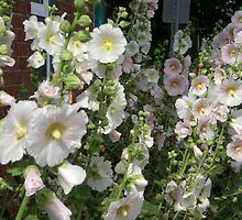Hollyhocks by Kathleen M. Daley