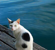 cat by averynkh