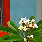 15/4 frangipani afternoon by Evelyn Bach