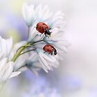 Ladybirds by Ellen van Deelen