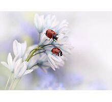 Ladybirds Photographic Print