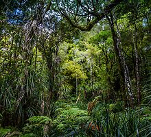 Waipoua Forest by Russell Charters