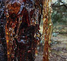 Wattle Tree Sap by CabrioletMan
