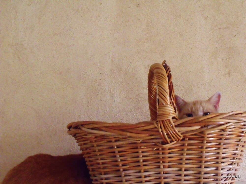 209/365 still life with cat(s) by LouJay