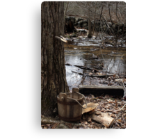 Old Fashioned Sugaring Canvas Print