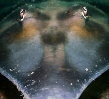 Portrait of a Shovelnose Ray by WillOwyong