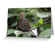 Butterfly 9 Greeting Card