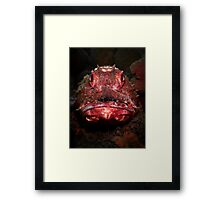 Portrait of a Red Rock Cod Framed Print
