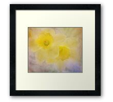 daffodil duo Framed Print