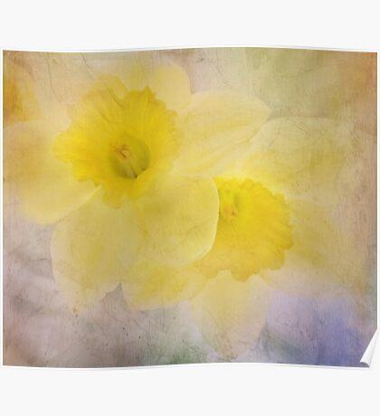 daffodil duo Poster