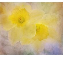 daffodil duo Photographic Print