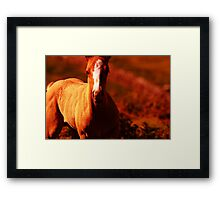 """""""Amber Colt"""" Nature Abstract Framed Print"""