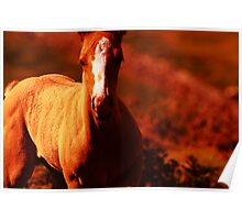 """""""Amber Colt"""" Nature Abstract Poster"""