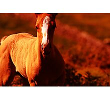 """Amber Colt"" Nature Abstract Photographic Print"