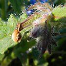 escargot by juha