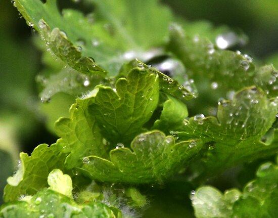 Morning Rain by lynn carter