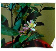 Lemon Tree Flower Poster