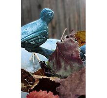 Bird Bath In the Fall Photographic Print