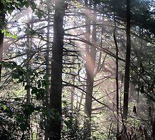 Pine Light by Joshua Bales