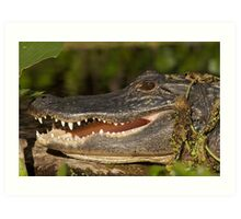 Alligator at Wekiwa Springs Art Print