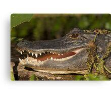 Alligator at Wekiwa Springs Canvas Print